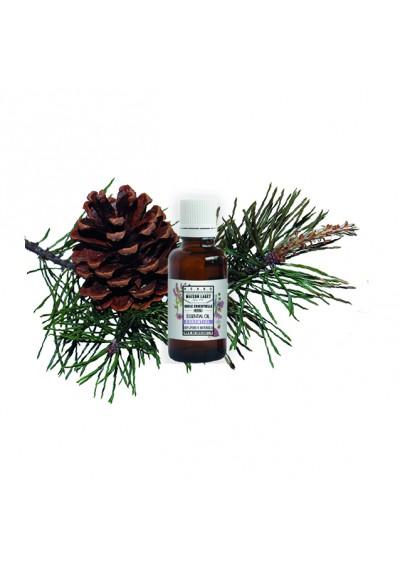 aromathérapie huile-essentielle-bio-pin-sylvestre écosse