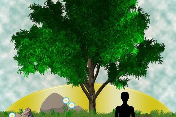 symbolisme de l'arbre de vie dans la spiritualité