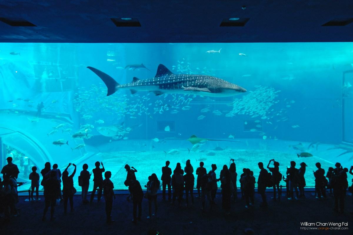 美之海水族館,一定要來打卡!