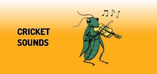 Cricket Sounds Pack | Orange Free Sounds
