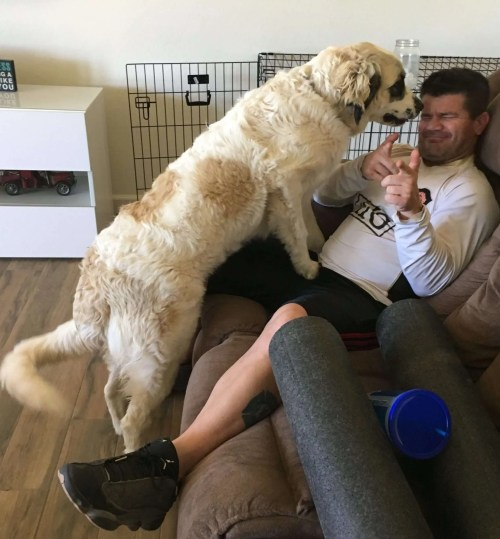 Huge dog in husband's face.