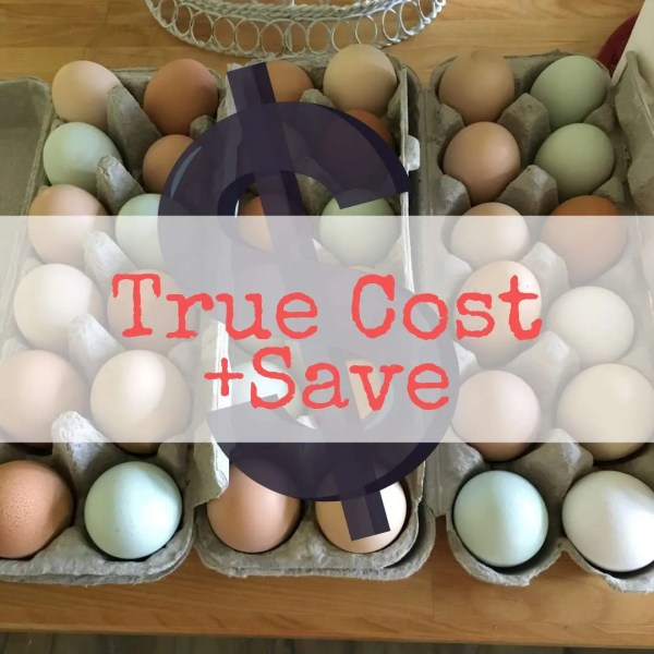 True Cost of Homegrown Eggs & How To Save