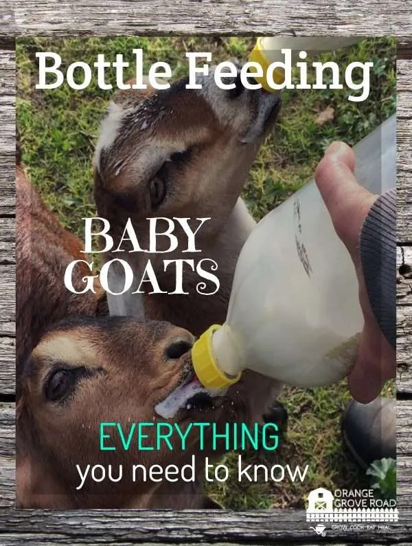 Everything You Need to Know About Bottle Feeding Baby Goats