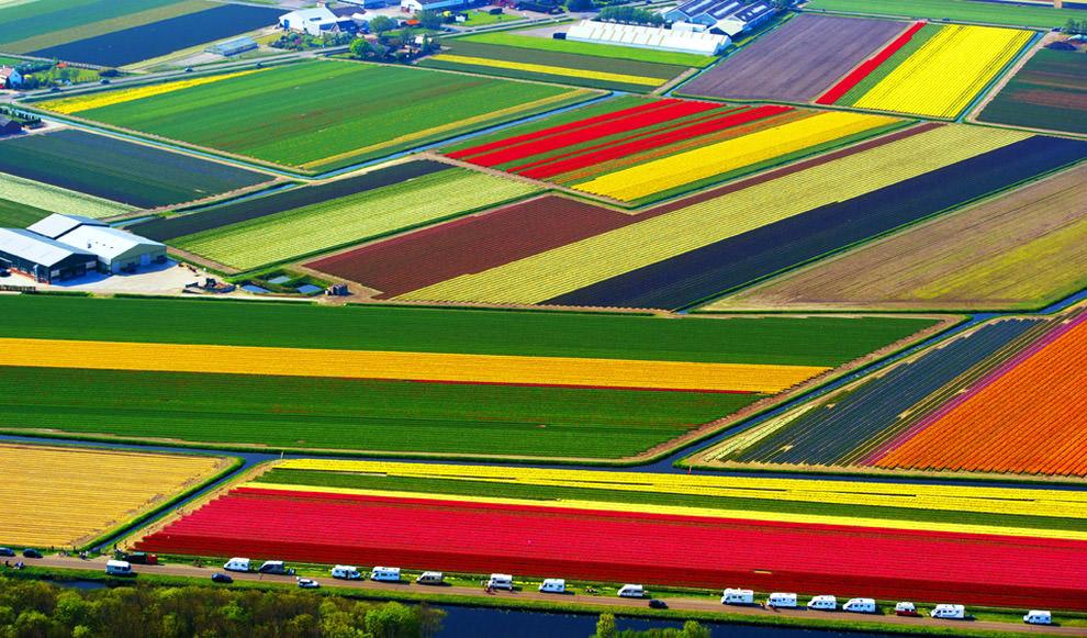 Tuplefelder in Lisse  Die 13 farbreichsten und