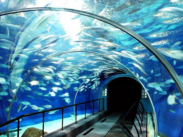 Shanghai Ocean Aquarium  Schicke Huser und Hotels gebaut