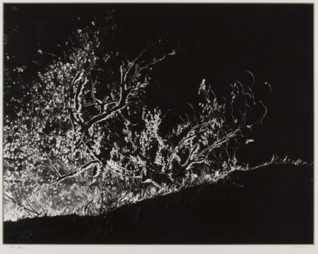 Alfred Monner, Tree Presence, Portland Art Museum