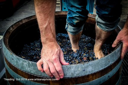 """In describing """"Treading"""" (October 2019), Chitty writes, """"The hands gripping the rim show that this is precarious work, and the submerged feet among the grapes tell us what is going on. It is an intimate portrait of small-batch winemaking."""""""
