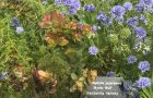 Manzanita's Hoffman Wonder Garden showcases plants from around the world that thrive on the northwest coast, all with arboretum-quality labels. Photo courtesy: Ketzel Levine