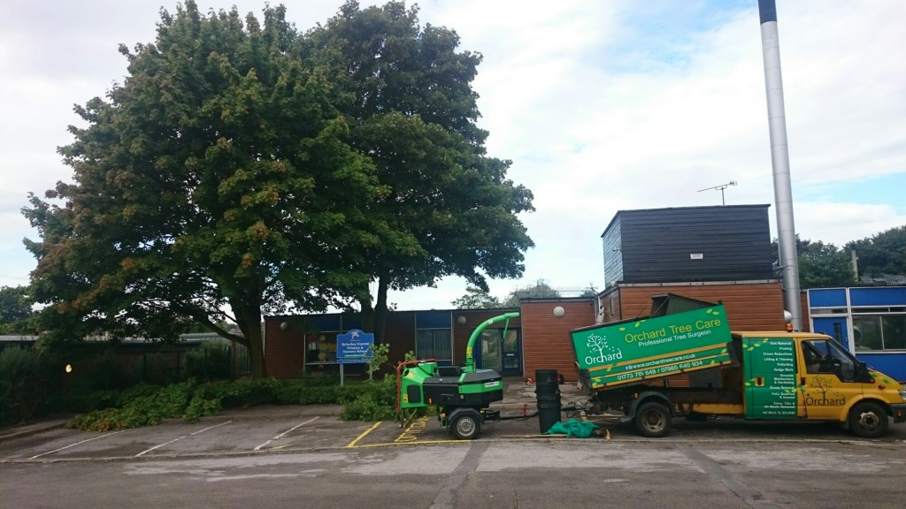 Tree Removal in Sutton-in-Ashfield Brierley Forest Entrance Before