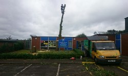 Tree Removal at a School in Sutton-in-Ashfield Brierley Forest Entrance After