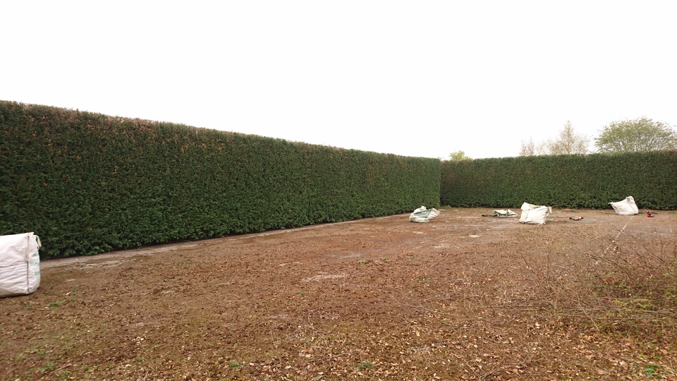 After Large Leylandii Hedge Reduction in Watnall, Nottingham