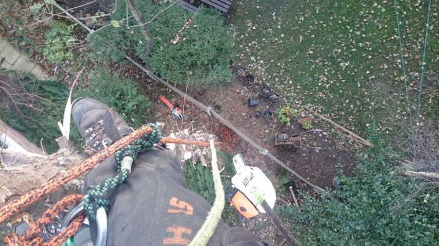 Tree Dismantling in Mapperley, Nottingham
