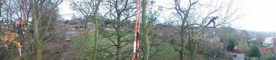 Tree Work Panorama, The Day in a Life of A Tree Surgeon-Arboriculturalist