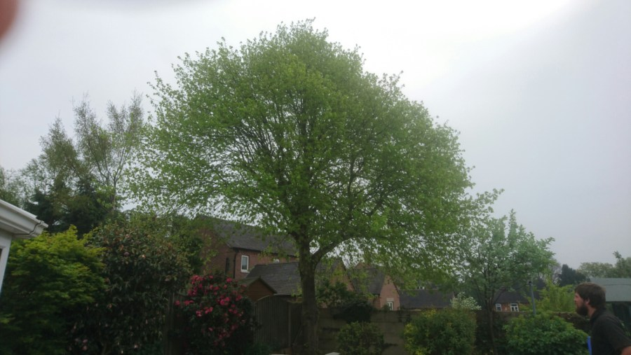 Tree Crown Thinning in Swanwick, Derbyshire, DE55 Before