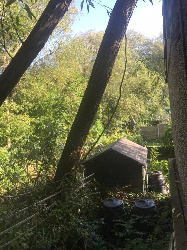 Dangerous Windblown Willow Tree Removal, Eastwood, Nottingham
