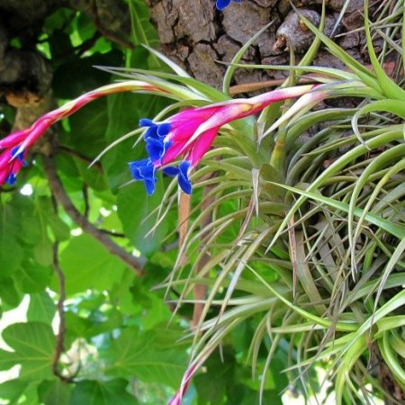Altre piante / other plants