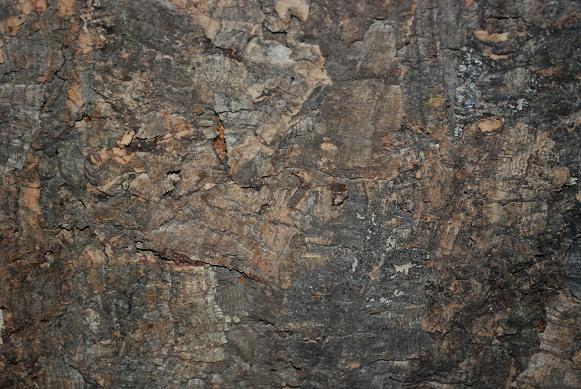 korkek-bark-bakgrund.jpg