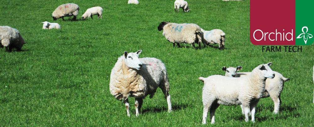 farmwizard for sheep