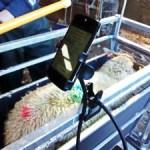 Flock Data Recording Success