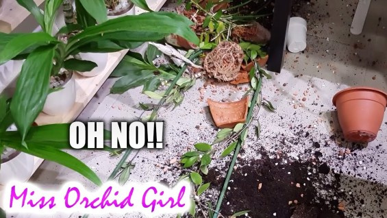 Disaster in the Orchid greenhouse + Updates and thoughts on semi hydroponics