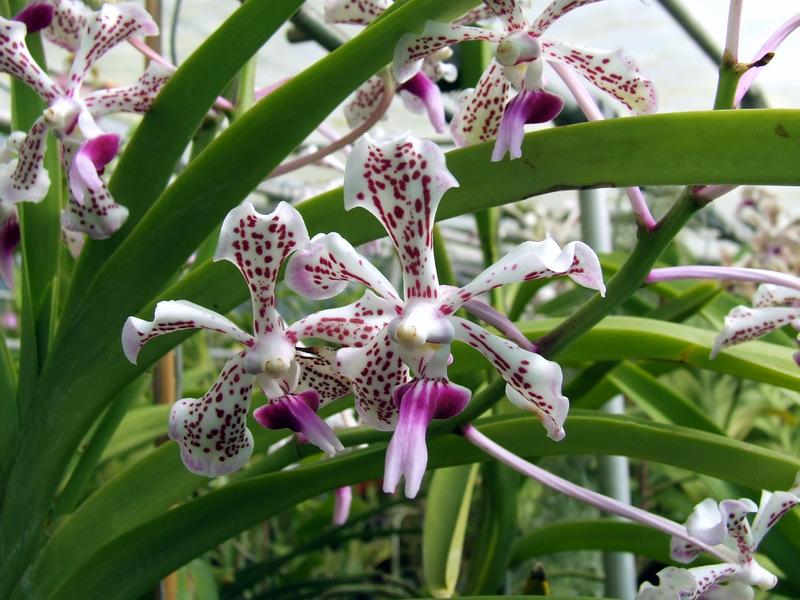 Keiki le orchidee da bambine for Radici orchidea
