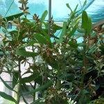 orchidee_schio_2