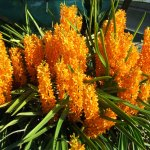 orchidee_schio_4