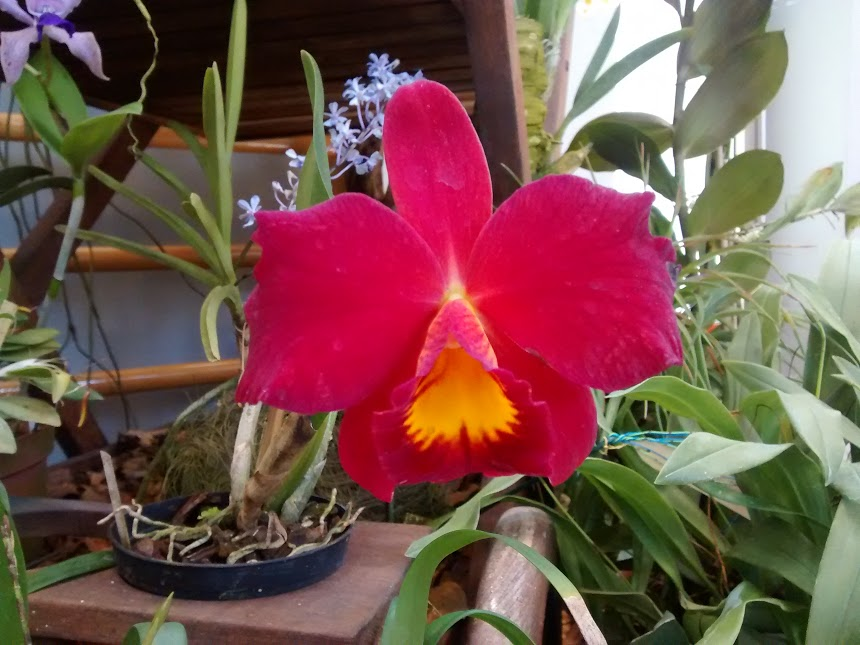 La community delle orchidee il club degli for Vieni da me di chi era la casa misteriosa