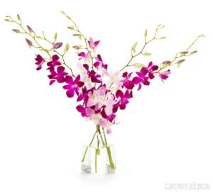 Orchid Origin