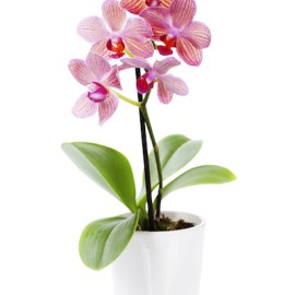 My Huge List of Orchid Abbreviations