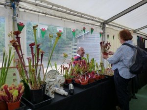 display by Malcolm's Carnivorous plants