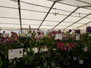 an Orchid Nursery display