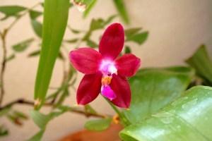 Penang Girl fiore