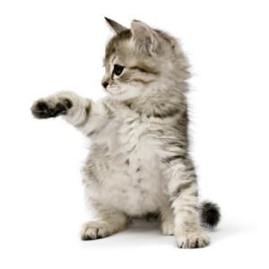 ordbajsarn-kattforsakring