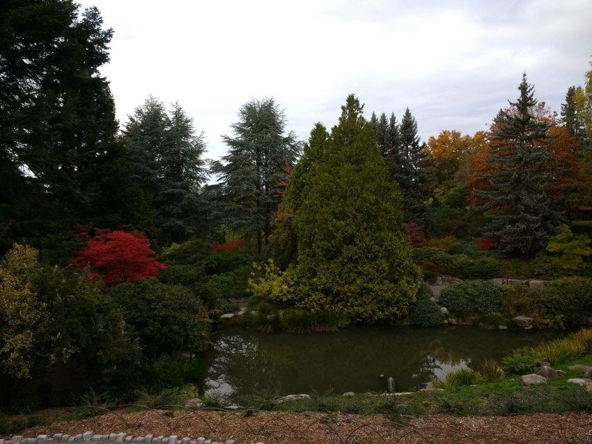 south seattle urban hike kubota gardens pond