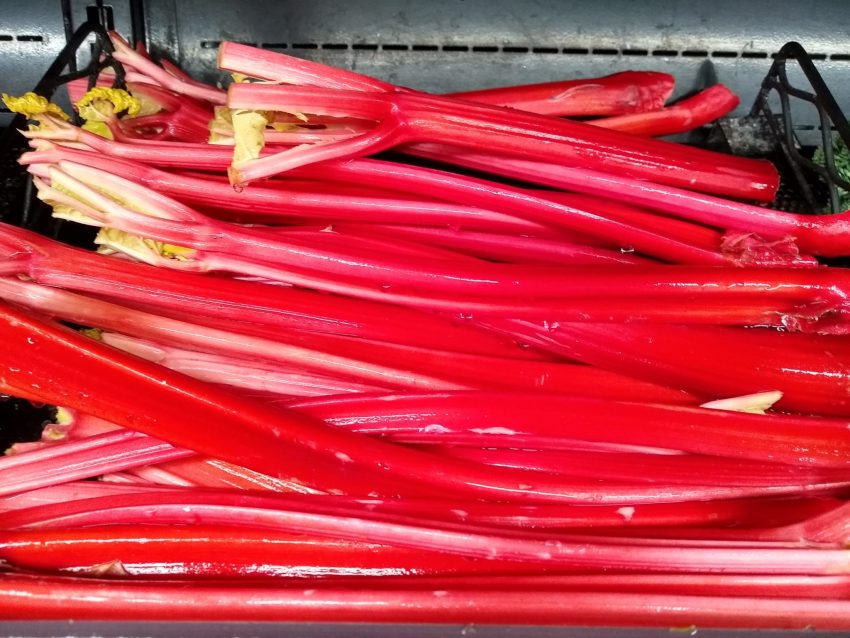 rows of rhubarb for sale