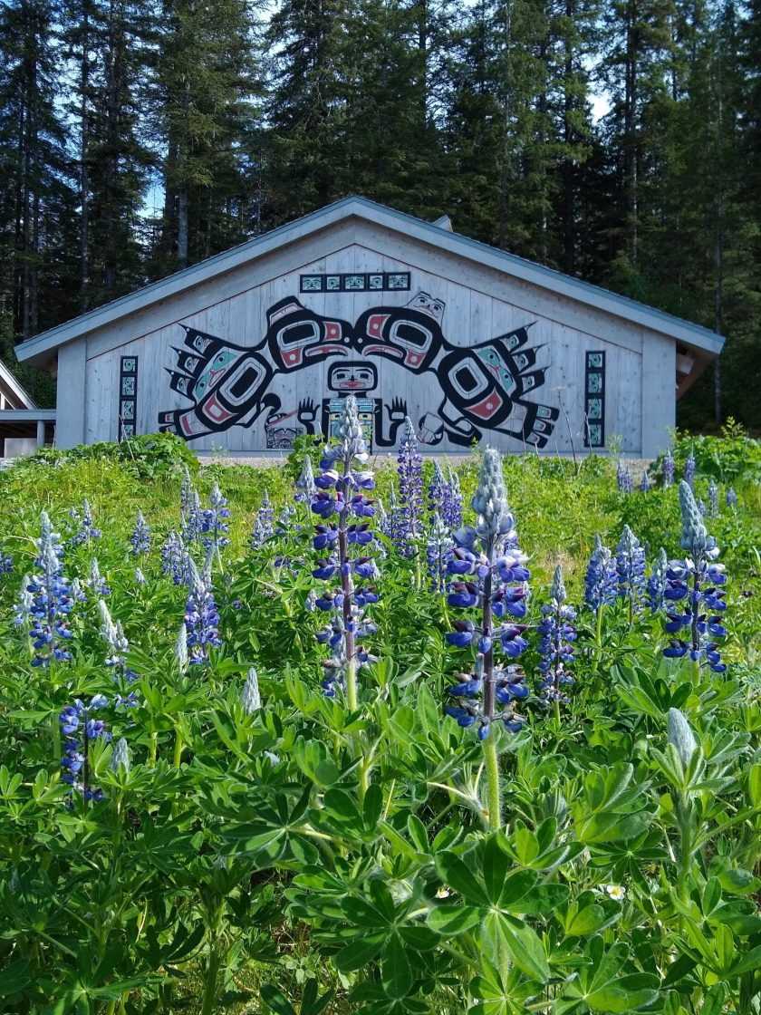A Tlingit house screen on the side of the Huna Tribal house in Bartlett Cove. Purple lupine wildflowers are in the foreground and the house is surrounded by evergreen trees