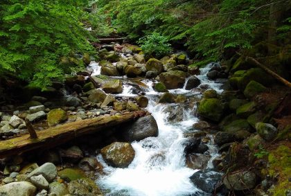 A creek tumbles over rocks in a dense green forest on the Asahel Curtis Nature Trail
