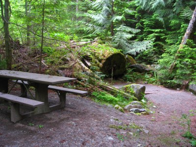 A picnic table in a dark and wet forest. There are trees around and an open area of dirt.