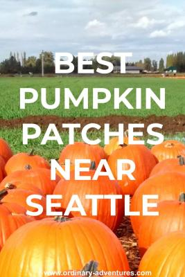 A bunch of big orange pumpkins in the foreground. In the background is  a green field and a more distant group of pumpkins. In the far distance are some buildings and trees against a cloudy sky. Text reads Pumpkin patch near seattle