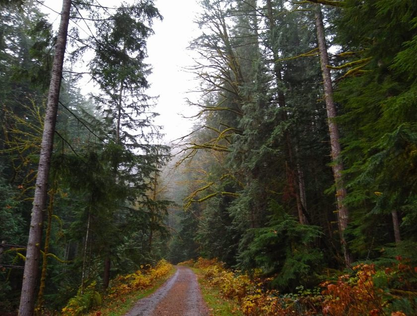 The wide, gravel Iron horse trail in North Bend passes through a forest on a foggy, rainy day. There are evergreen trees and some lingering fall color