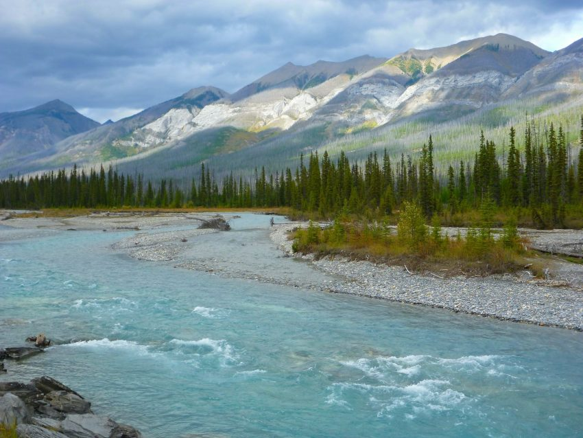 Blue water of the Kootenay River rushes by gravel bars and trees in a valley between high mountains in Kootenay National Park