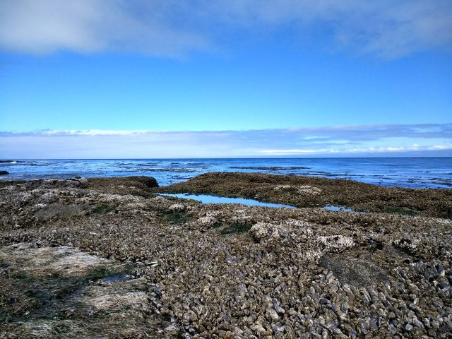 Mussels cover rocks around tidepools at Salt Creek County park near Port Angeles. The blue water and clouds are visible in the background