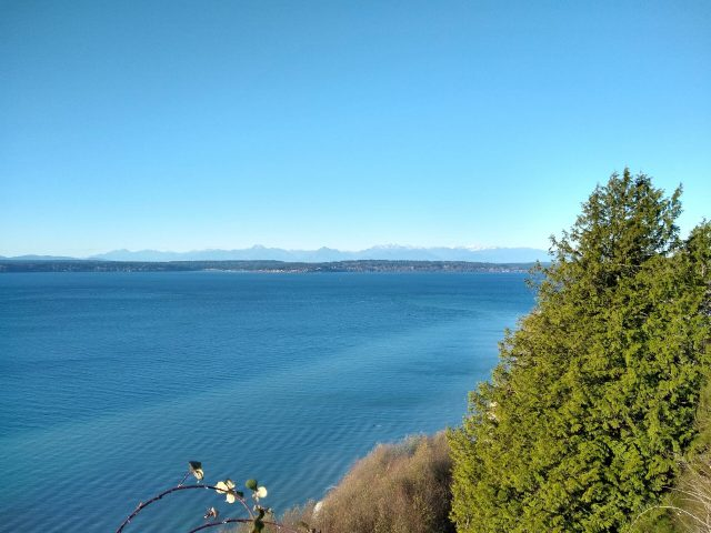 Trees and bushes in the foreground above the Salish Sea. The water and sky are blue and cloudless and there are distant mountains and islands seen from the Discovery park loop trail in seattle