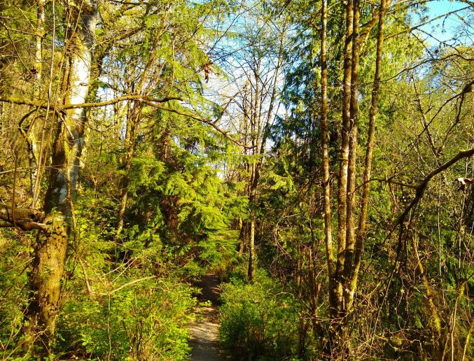 Green trees and undergrowth surround a narrow trail