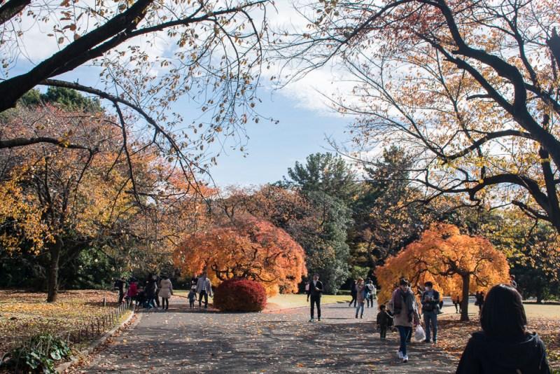 shinjuku gyoen park review