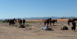 Horses, donkeys and camels are all present in the area, but we have not yet seen the camels!