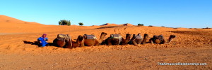 Our camels await