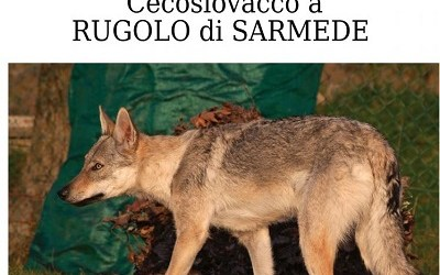 Cane scomparso in data 21/01/2020 in Sarmede (TV)