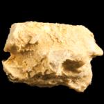 Corynotrypa-_deliculata_250pxB